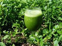 Een groene smoothie, gezond, lekker en zo gemakkelijk!